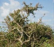 Biodiversity plantation project