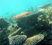 Mithapur coral reef restoration project